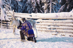 White Reindeer and Suomi man in Ruka in Lapland in Finland. White Reindeer and Suomi man in national costume in Ruka in Lapland, in Finland. Selective focus Stock Photos