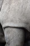 White rhino, Ceratotherium simum Stock Photo