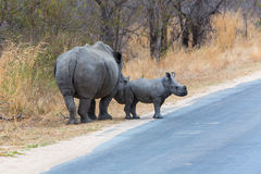 White Rhino Cow and calf Royalty Free Stock Images