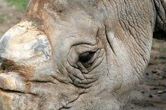 White Rhino Eye Royalty Free Stock Image