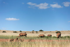 White Rhino Landscape stock photography