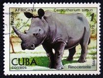 White Rhinoceros, African fauna series, circa 1978 Royalty Free Stock Image