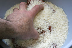 White Rice Stock Image