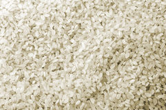 White Rice Crop Texture Royalty Free Stock Photos