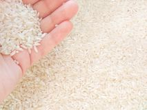 White rice in hand on light background stock images