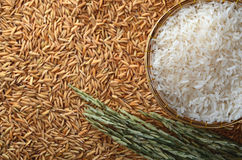 White rice and paddy. White rice in basket and paddy Royalty Free Stock Images