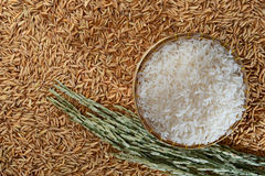 White rice and paddy. White rice in basket and paddy Stock Images