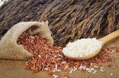 White rice and red rice Thai Jasmine rice Stock Photos