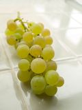 White Riesling Grapes on the vine. Ripening white Riesling grapes on the vine. Grapes on a shiny grey ceramic tile surface. Vertical Royalty Free Stock Photo