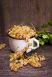 White ripe currant. White ripe raw fresh currant with green cilantro in studio Stock Image