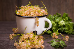 White ripe currant. White ripe raw fresh currant with green cilantro in studio Royalty Free Stock Photography