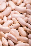 White ripe haricot beans Stock Photography