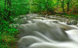 White river. In Stara planina mountain in Bulgaria Royalty Free Stock Images