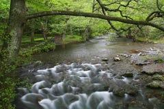 White river. In Stara planina mountain in Bulgaria royalty free stock photo