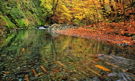 White river. In Stara planina mountain in Bulgaria stock images