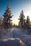 White road in deep winter forest Royalty Free Stock Photos