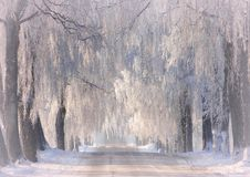 Wintertime .White road near city Siauliai stock images