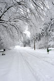 White road and trees in winter season. Group of white trees and road in winter season Royalty Free Stock Photography