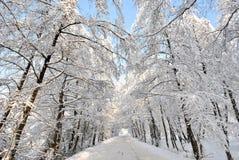 White road through white forest Royalty Free Stock Photo
