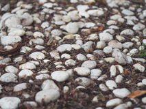 White Rock. Rock with brown leaf on ground Stock Photography