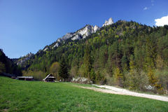White rock and forest at spring in Pieniny Royalty Free Stock Image