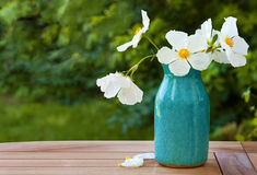 White Rock Rose Blossoms in a Blue Crazed Vase on Wooden Table. Horizontal of an outdoor shot of rock rose flowers in a turquoise vase sitting on a teak table Royalty Free Stock Image