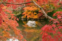 White rock in a zen pond surrounding by red autumn tree , Kyoto. White rock in still zen pond with water reflection flamed by red and orange maple trees Stock Images