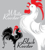 White Rooster. Black Rooster. Stock Photos