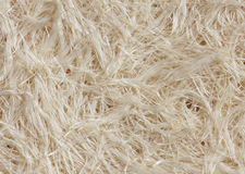 White roots of grass, bottom view, texture, closeup Royalty Free Stock Photo