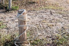 White rope tied with broken stump on the ground royalty free stock images