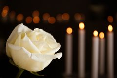Free White Rose And Blurred Burning Candles On Background. Funeral Symbol Stock Photography - 158718862