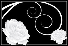 White Rose Background. An image of a flower themed design element Stock Photo