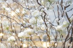 White rose background and backdrop in the decoration cozy branch and warm light stock photography