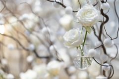White rose background and backdrop in the decoration cozy branch and warm light stock photo