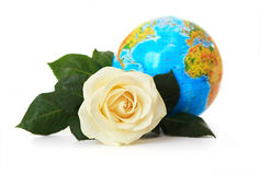 White rose on a background of the globe. Royalty Free Stock Photos