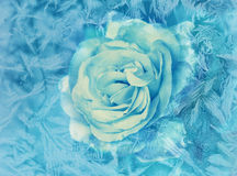 White rose behind a frozen window Royalty Free Stock Photo