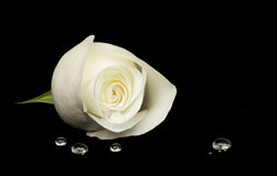 White rose on black velvet Royalty Free Stock Images