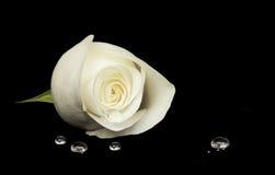 White rose on black velvet Royalty Free Stock Images