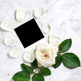 White rose and blank photo Royalty Free Stock Photos