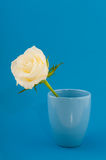 White rose on blue Stock Image