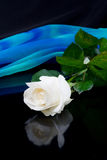 White rose and blue silk Royalty Free Stock Photography
