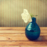 White rose in blue vase Stock Photo