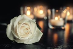 White rose and blurred burning candles on table in darkness, space for text. Funeral symbol royalty free stock image