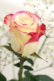 White rose bouquet. Stock Photography