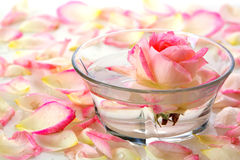 White Rose in a bowl of water and  petals. Stock Images