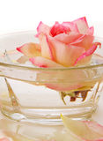 White Rose in a bowl of water and  petals. Royalty Free Stock Image