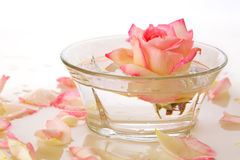 White Rose in a bowl of water and  petals. Stock Photography