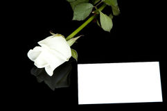 White rose and card Stock Photo