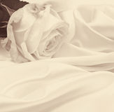 White rose close-up as background. In Sepia toned. Retro style Royalty Free Stock Image