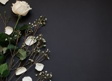 White rose and dried flowers on black paper  background whith copy space. royalty free stock images